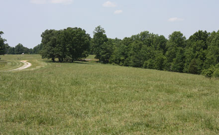 Scenic pasture on the western portion of the farm along Sycamore Lane
