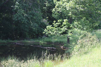 Pond on Mini Farm/Lot 4